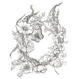 Dziki pies wzrastał kwiat ramy konturu atramentu kolorystyki dorosłej strony rysunkowego wektorowego clipart na białym tle Zdjęcia Stock