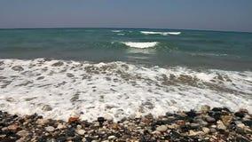 Dziki plażowy zbliżenie zdjęcie wideo