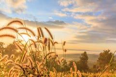 Dziki pole trawa na zmierzchu zdjęcie royalty free