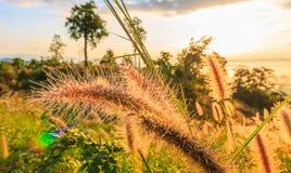 Dziki pole trawa na zmierzchu fotografia royalty free
