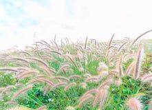 Dziki pole trawa na zmierzchu obraz stock