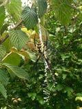 Dziki przyglądający pająk obraz stock