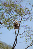 Dziki pszczoła rój Obraz Royalty Free