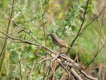 dziki ptak Obrazy Royalty Free