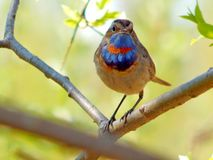 dziki ptak Zdjęcia Royalty Free