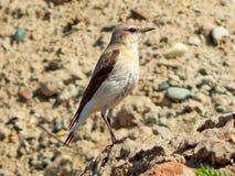 dziki ptak Obraz Royalty Free