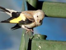 dziki ptak Zdjęcia Stock