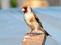 dziki ptak Obrazy Stock