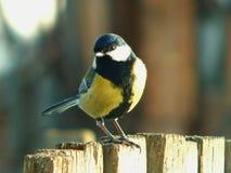 dziki ptak Fotografia Stock