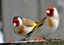 dziki ptak Obraz Stock