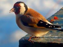 dziki ptak Fotografia Royalty Free