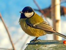 dziki ptak Zdjęcie Royalty Free