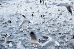 dziki ptasi tłum Zdjęcia Royalty Free