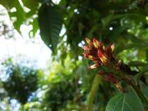 dziki roczny uprawa kwiat Zdjęcia Royalty Free