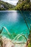 Dziki rybi pływanie w lasowym jeziorze w krysztale - jasna turkus woda Plitvice, park narodowy, Chorwacja fotografia stock