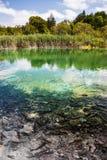 Dziki rybi pływanie w lasowym jeziorze Plitvice, park narodowy, Chorwacja fotografia stock