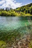 Dziki rybi pływanie w lasowym jeziorze z siklawami Plitvice, park narodowy, Chorwacja fotografia royalty free