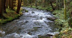 Dziki rzeczny Doubrava w spadku barwi, jesień krajobraz zdjęcie wideo