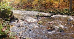 Dziki rzeczny Doubrava w spadku barwi, malowniczy krajobraz zdjęcie wideo