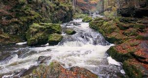 Dziki rzeczny Doubrava w spadku barwi, malowniczy krajobraz zbiory