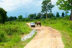 Dziki słoń obraz stock
