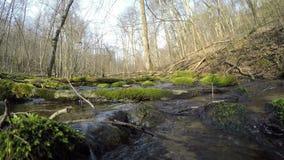 Dziki strumyk wody przepływ mechaci drzewa i kamienie 4K zbiory