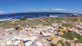 Dziki Strusi przylądka półwysep zdjęcie wideo
