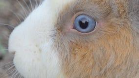 Dziki Tajlandzki królik w naturze zbiory wideo