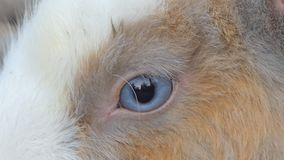 Dziki Tajlandzki królik w naturze zdjęcie wideo