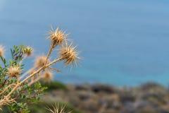 Dziki torns agaiinst błękita morze obrazy stock