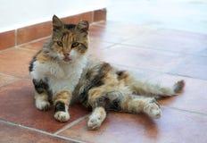 Dziki uliczny kot, śpiący kot w ulicie, kot, uliczny kot w Tilos wyspie Obraz Royalty Free