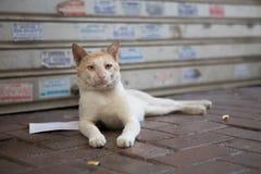 Dziki uliczny kot relaksuje wśród ściółki Obrazy Royalty Free