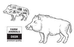 Dziki wieprz, knura gemowego mięsa diagrama rżnięty plan - elementy ustawiający na chalkboard ilustracja wektor