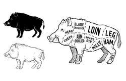 Dziki wieprz, knura gemowego mięsa diagrama rżnięty plan - elementy ustawiający na chalkboard royalty ilustracja