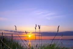Dziki wysoki trawa zmierzch na dzikim atlantyckim sposobie Obraz Royalty Free