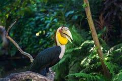 Dziki życie Bali wyspa Indonezja Fotografia Stock