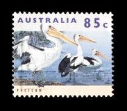 Dziki ?ycie na znaczkach pocztowych zdjęcie royalty free