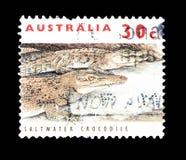 Dziki ?ycie na znaczkach pocztowych obraz royalty free