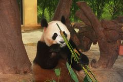 dziki zoo w Guangzhou, Guangdong, porcelana Zdjęcia Royalty Free