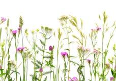 Dzikich kwiatów Bezszwowa granica Zdjęcie Stock
