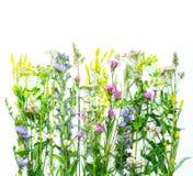 Dzikich kwiatów granica Zdjęcie Royalty Free