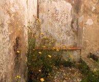 Dzikich kwiatów kamienna ściana Obraz Royalty Free