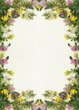 Dzikich kwiatów rama Zdjęcie Stock