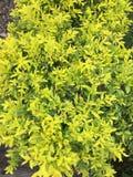 Dzikich kwiatów roślina fotografia royalty free