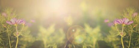 Dzikich kwiatów spadku lub lata tła sztandar Zdjęcia Stock