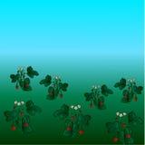 Dzikich truskawek śródpolny tło z niebieskim niebem Zdjęcia Stock