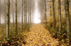 Dzikich wiśni drzewo Obrazy Stock