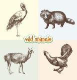 dzikich zwierząt Obrazy Stock