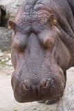 dzikich zwierząt Zdjęcia Stock