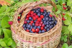 Dzikie czarne jagody i truskawki w kosza outdoors zbliżeniu Fotografia Stock